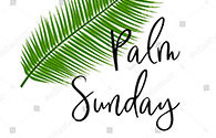 palm-image-thumb